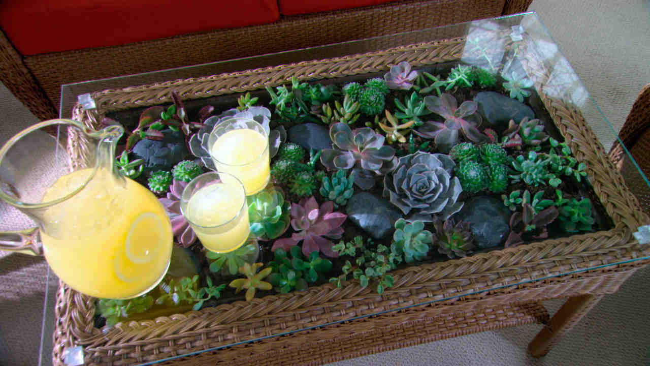 Video: Learn & Do: How to Make a Terrarium Coffee Table | Martha Stewart - Video: Learn & Do: How To Make A Terrarium Coffee Table Martha