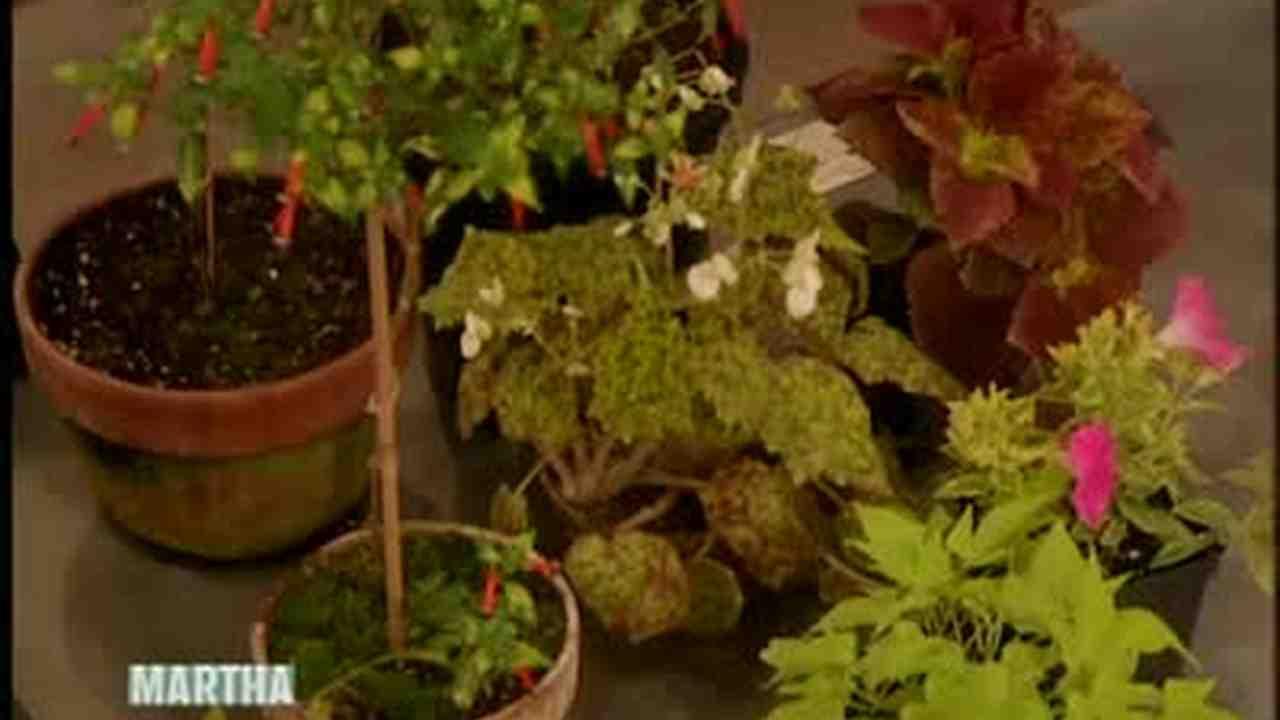 Video: Dennis Schrader\'s Choices for Great Garden Plants | Martha ...