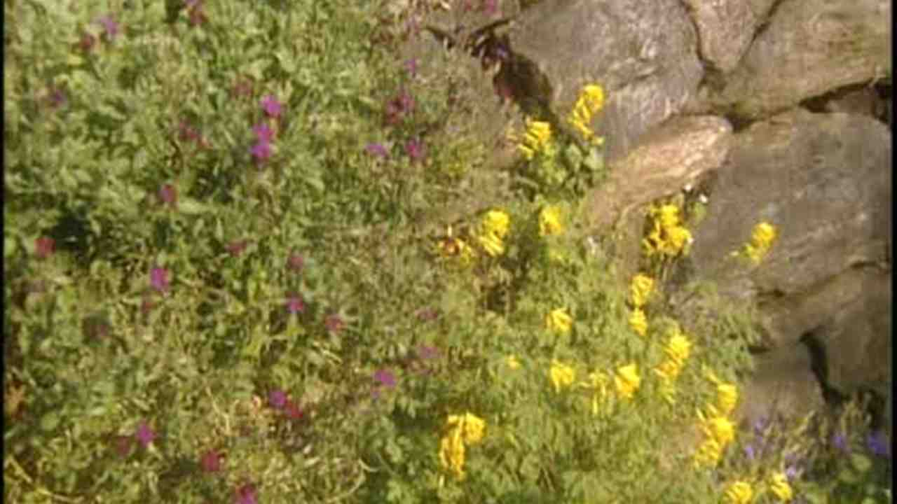 Video: How to Plant a Crevice Garden with Seeds and Moss | Martha ...