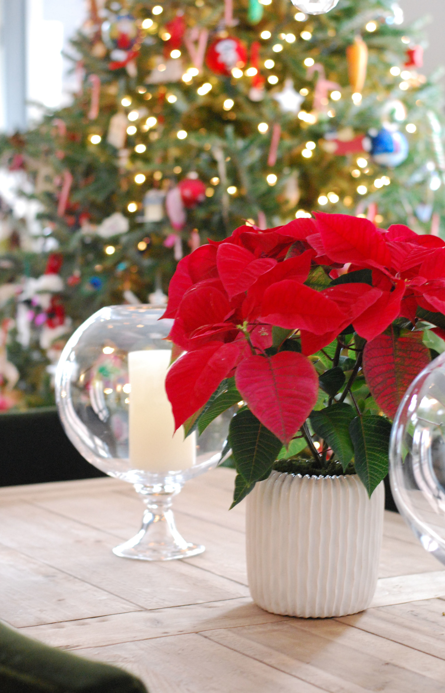 10 Festive (But Not Fussy) Ways To Decorate With Plants