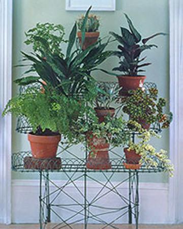 Repotting Houseplants Martha Stewart