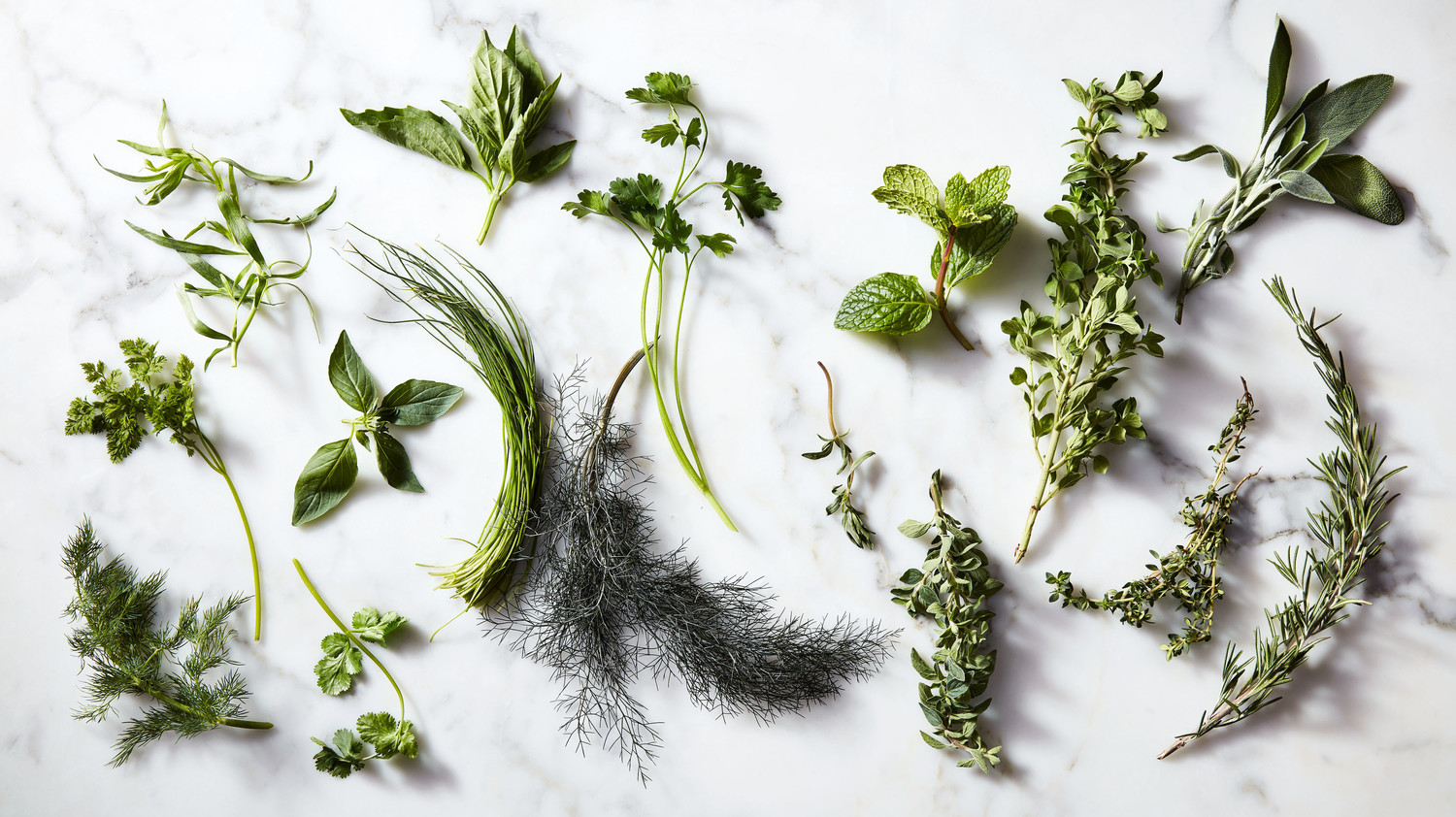 herbs thyme savory sage rosemary marjoram mint oregano basil tarragon cilantro dill parsley chives chervil