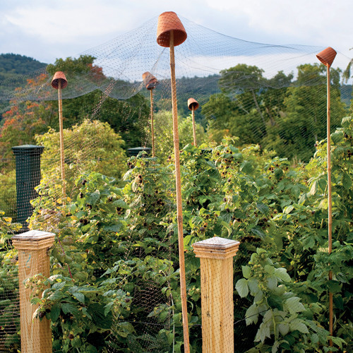 Berry Arbors: How To Protect Berry Bushes From Birds
