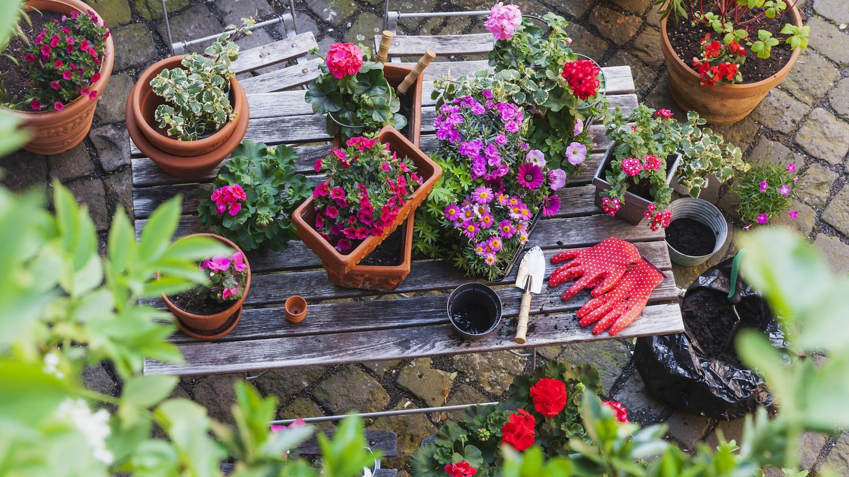 The Brains Secret Gardeners >> Here S How Gardening Benefits Your Health Martha Stewart