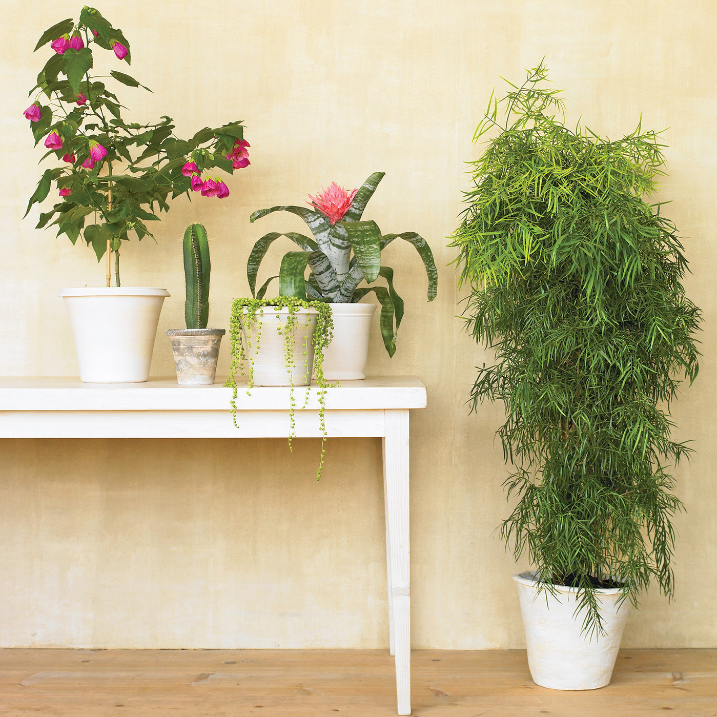 The Best Plants To Purify Your Home