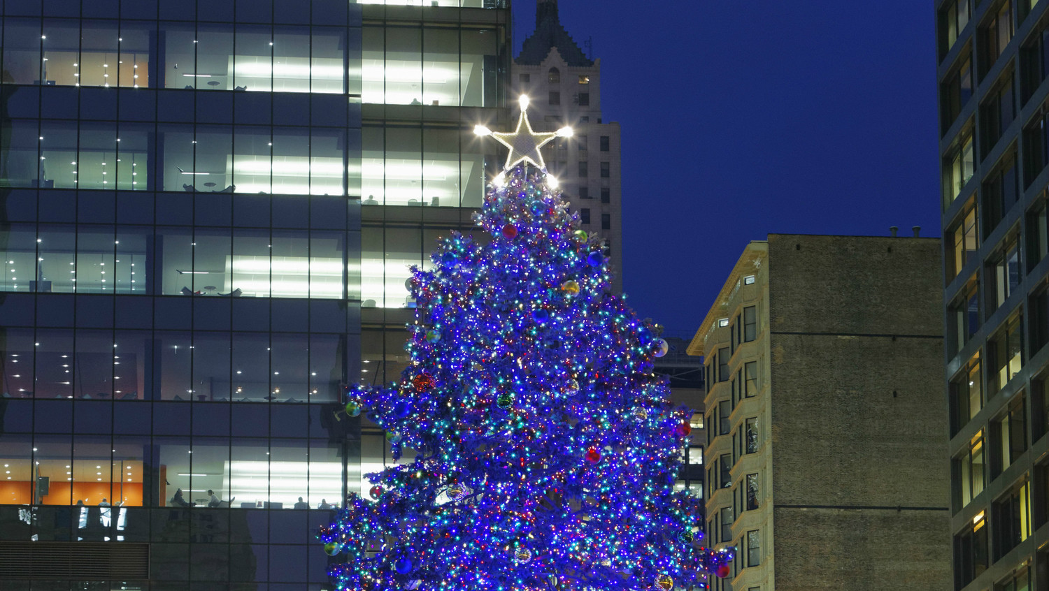 its official chicago has chosen their annual christmas tree - Christmas Tree In Chicago