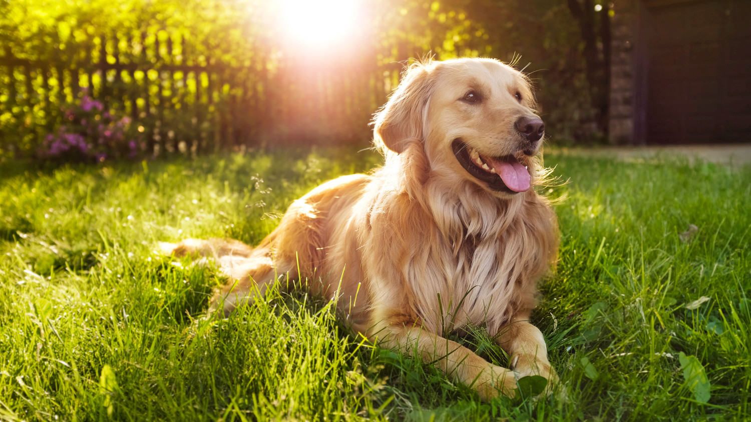 Allergic To Your Pet 3 Steps To Diagnose Treat And