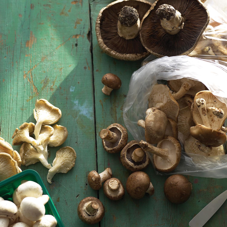 Mushroom Recipes Martha Stewart