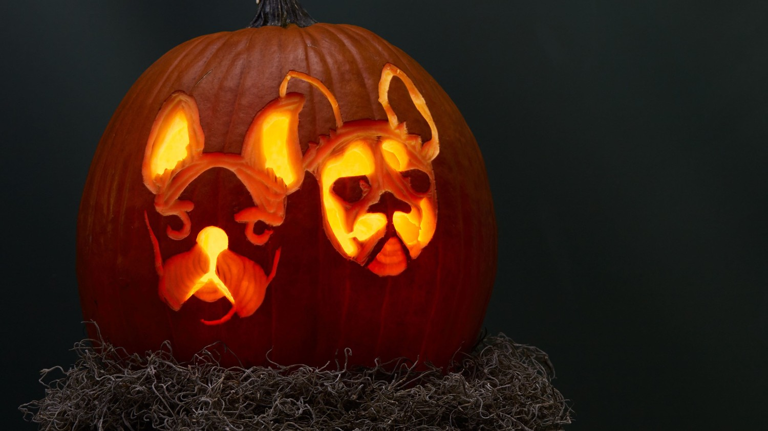 Dog-o'-Lantern Pumpkin
