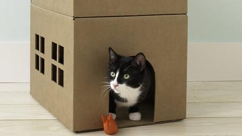 How To Make A Cardboard Cat Playhouse Martha Stewart