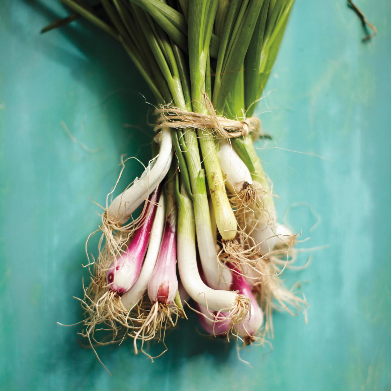 The Early Onion | Martha Stewart