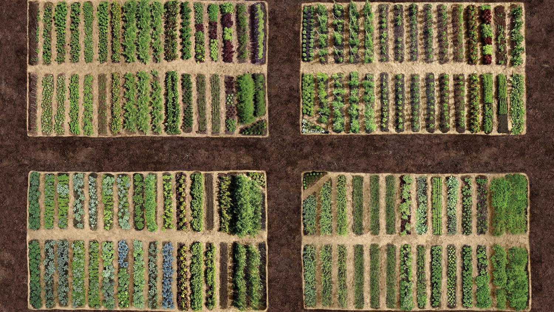 Planning Your Vegetable Garden | Martha Stewart