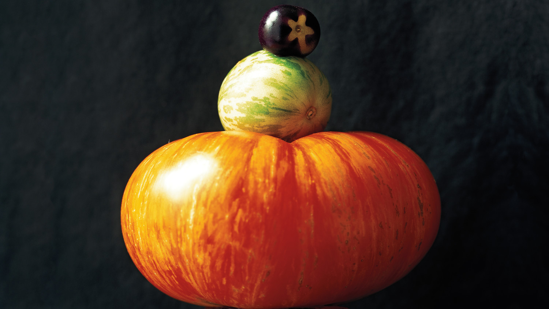 opener-tomatoes-md109341.jpg
