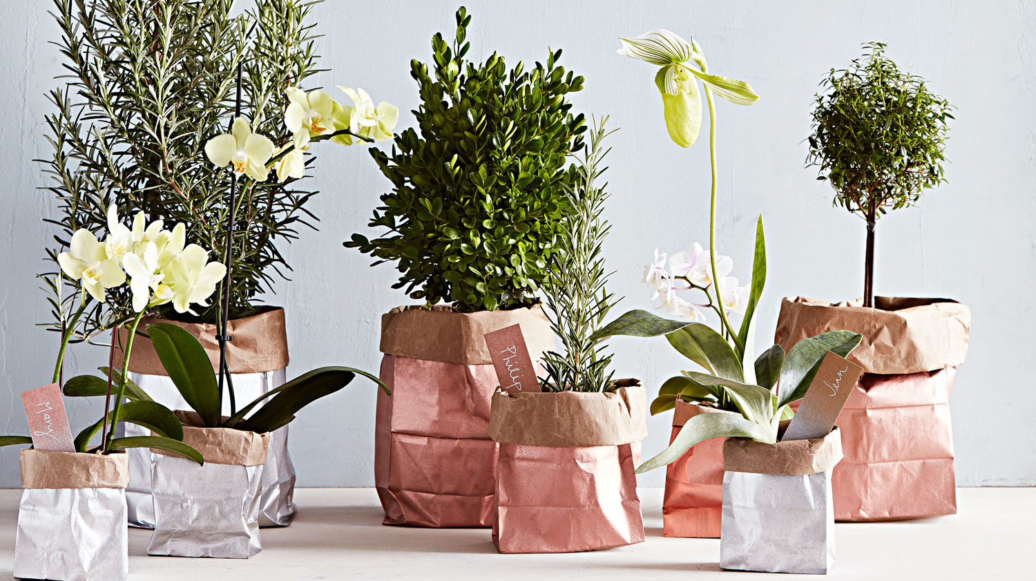 Spray-Painted Plant Gift Bags