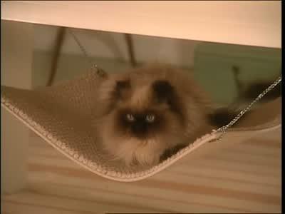 video  how to make a cat hammock   martha stewart  rh   marthastewart