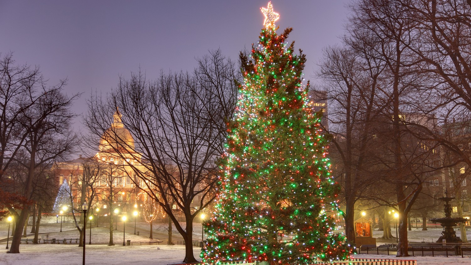 boston u0027s christmas tree commemorates a 100th anniversary martha