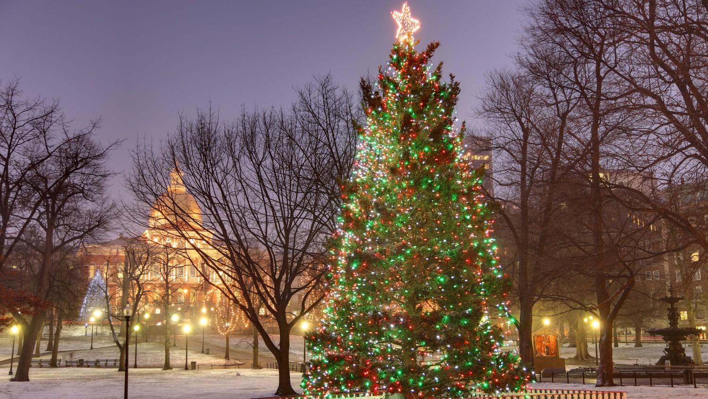 Christmas Tree Farms Ny