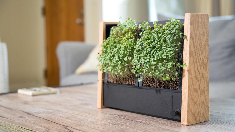 Indoor Veggie Garden Container garden ideas martha stewart micro veggie vertical garden indoor workwithnaturefo
