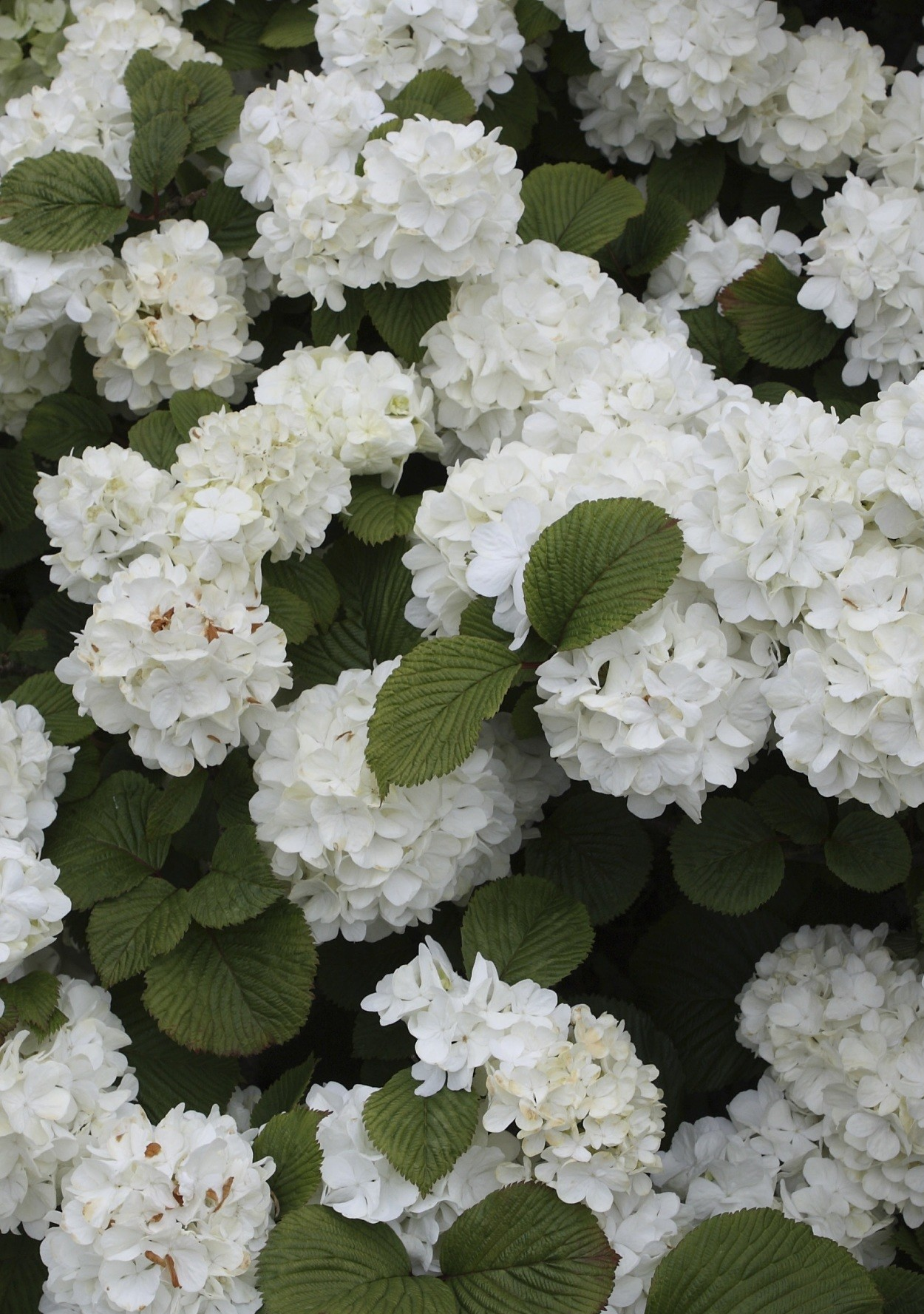 7 Show-Stopping Flowering Shrubs for Your Garden | Martha ... Diy Sweepstakes
