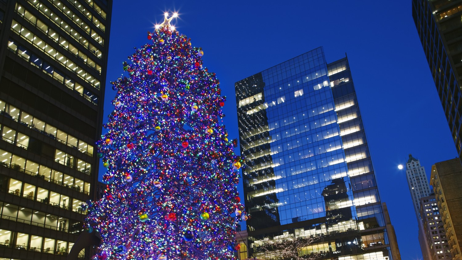 the story behind chicagos christmas tree will warm your heart martha stewart - Christmas Tree In Chicago