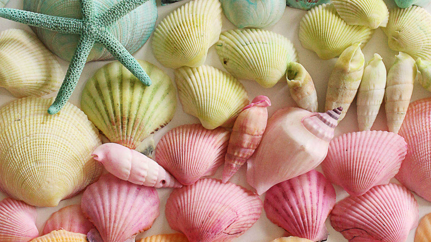 Dyed Seashells