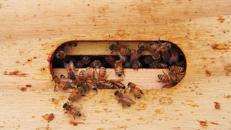 how to get rid of ants martha stewart