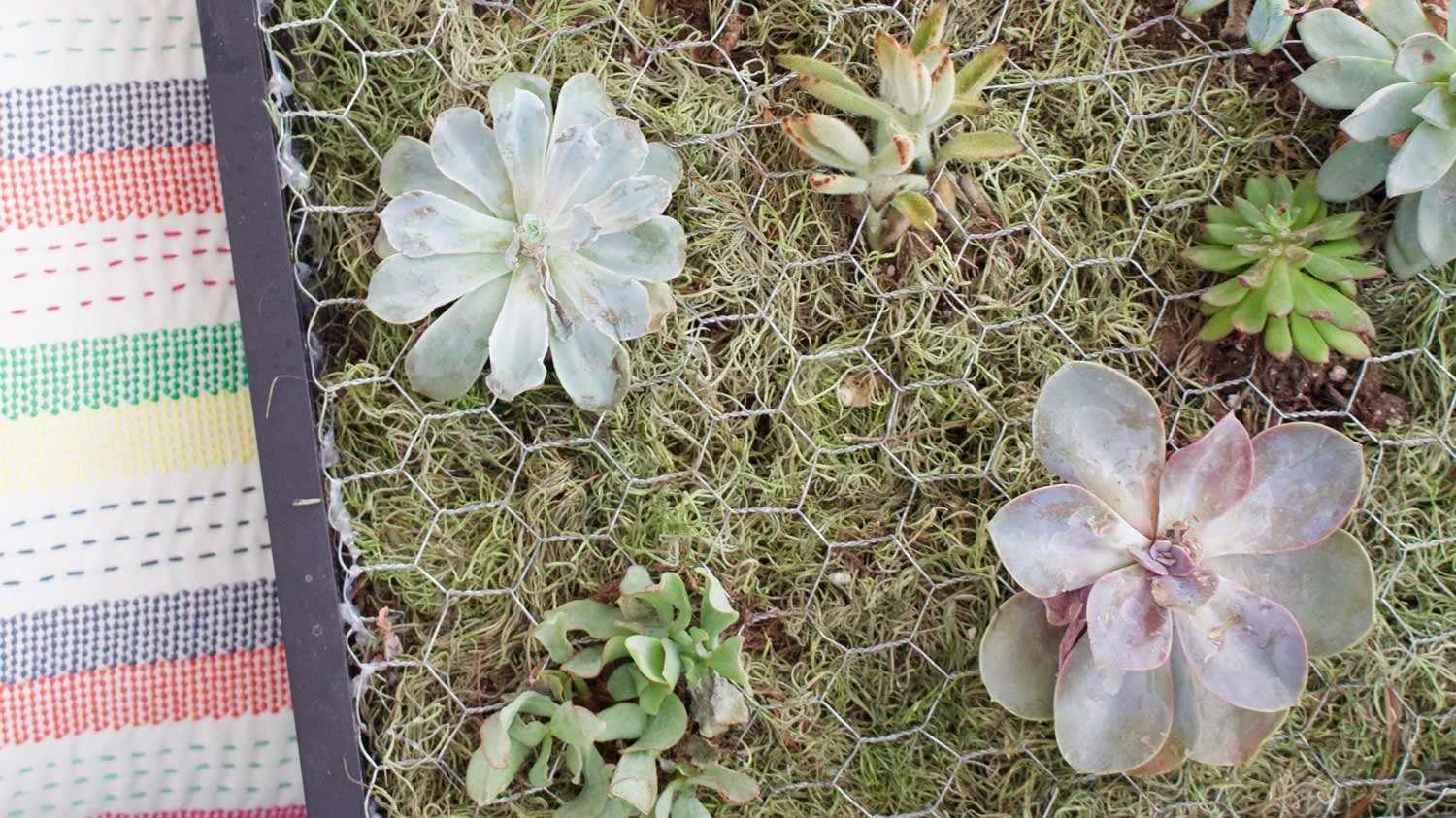 how to build a succulent wall planter