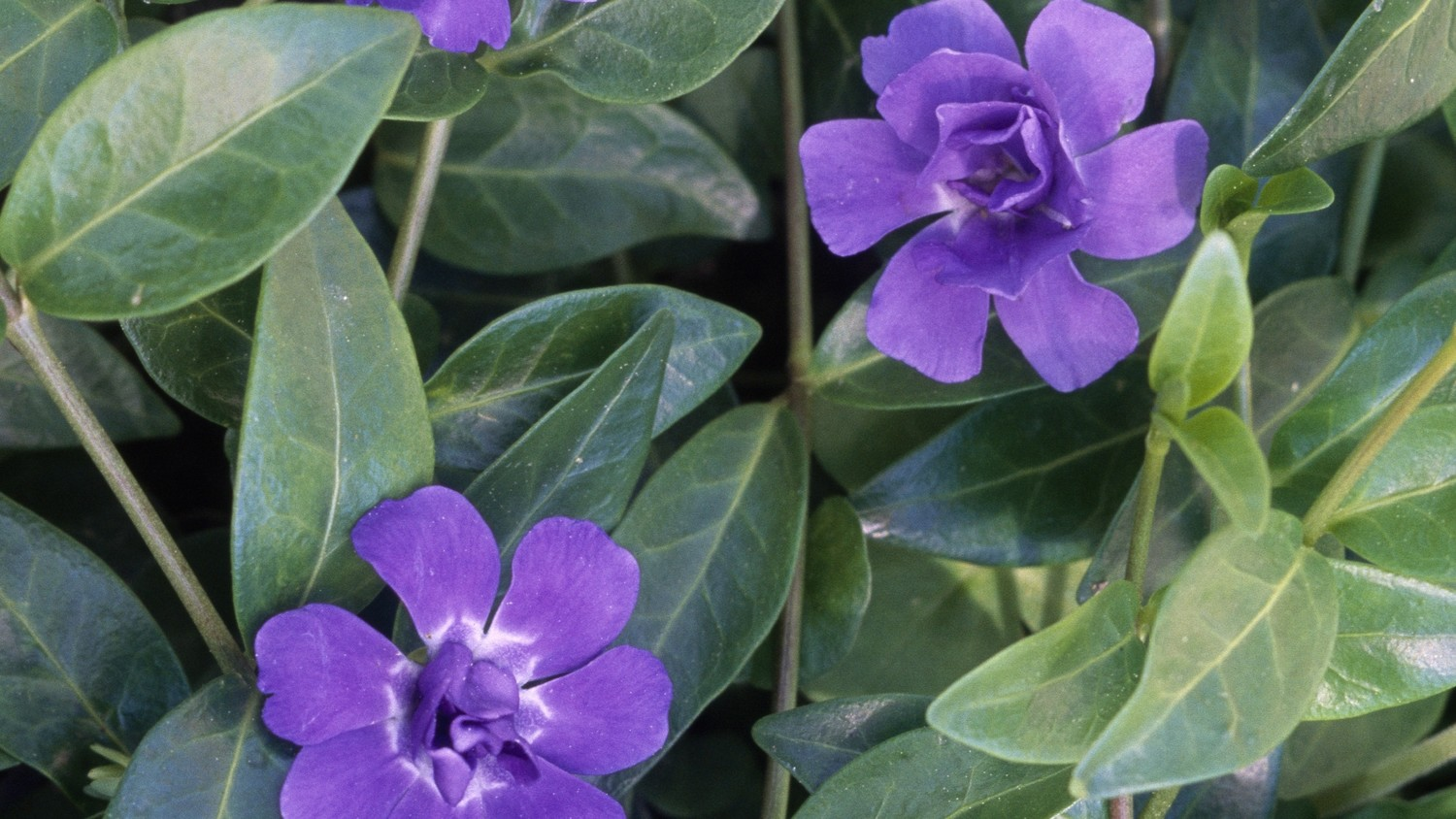 Three Ways to Spot Weeds and Invasive Flowers in Your Garden