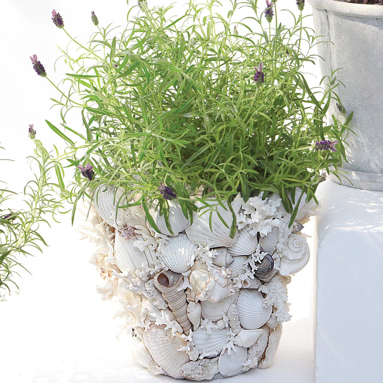 Home Design Ideas Decorating Gardening: Shell Garden Pots How-To