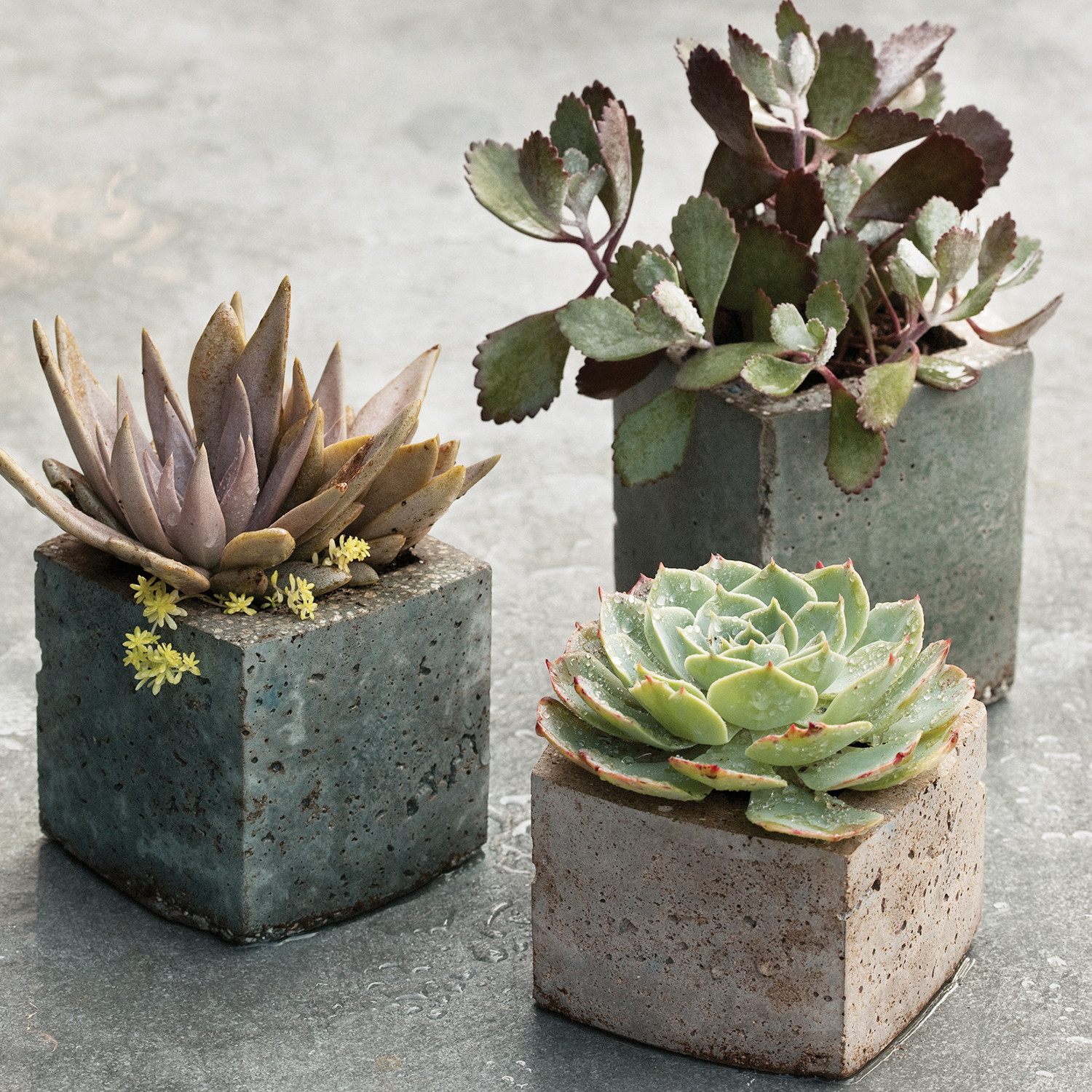 Pots with a personal touch hypertufa martha stewart for Decoration jardin cactus