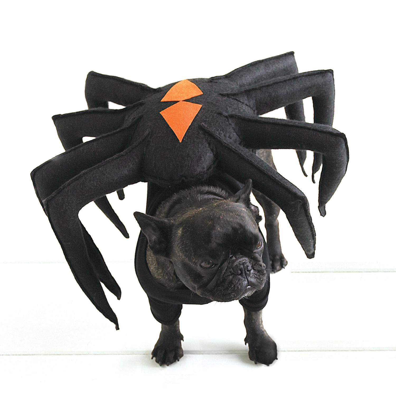 pet halloween costumes | martha stewart