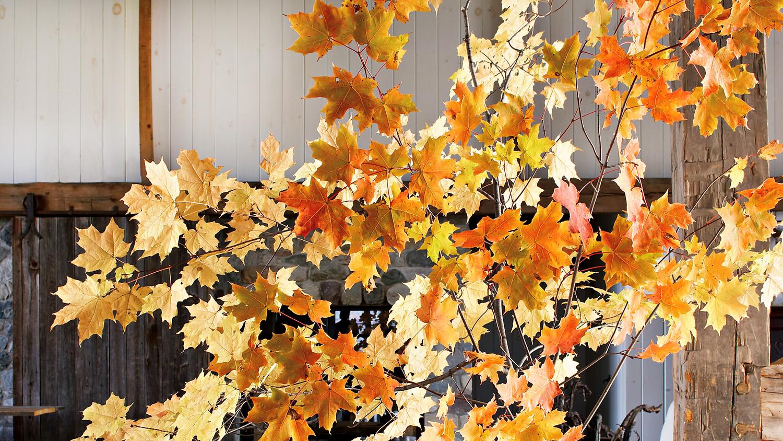 mld104573_1009_livingroom-leaves.jpg