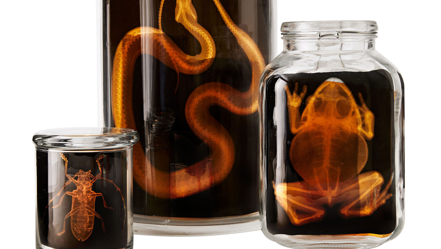Animal X-Ray Jars