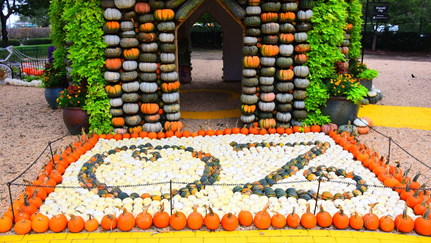 take a tour of the 90 000 pumpkins at the dallas arboretum and