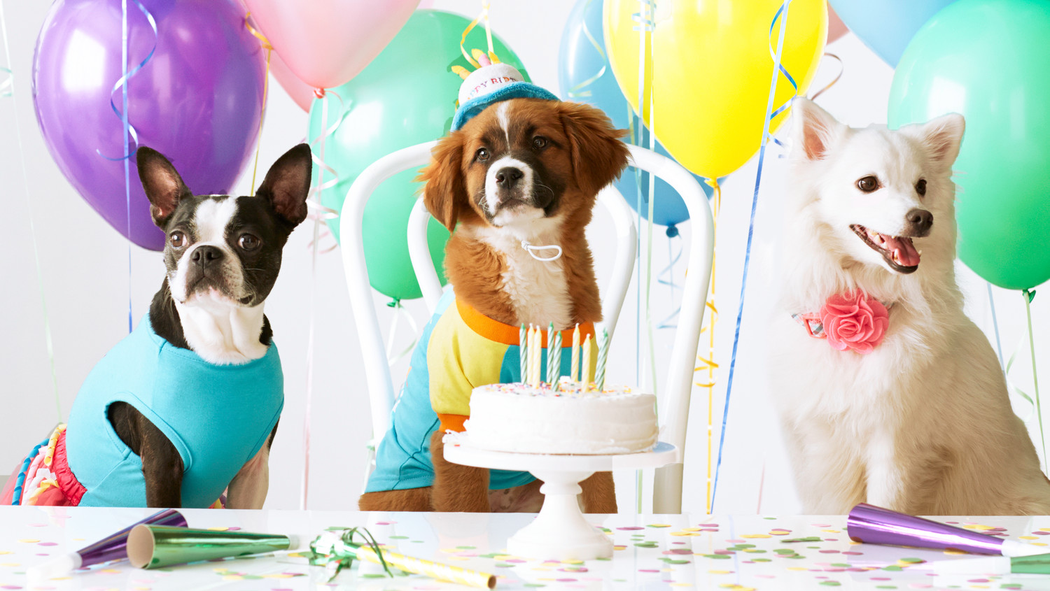 Dog party with balloons and cake