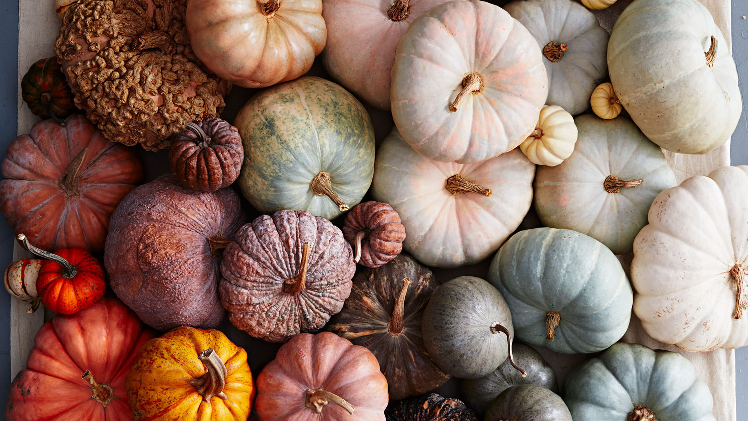A Guide to All Different Types of Pumpkins