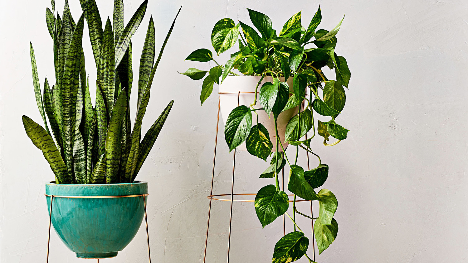 Instant Upgrade: Tomato Cage Plant Stand | Martha Stewart