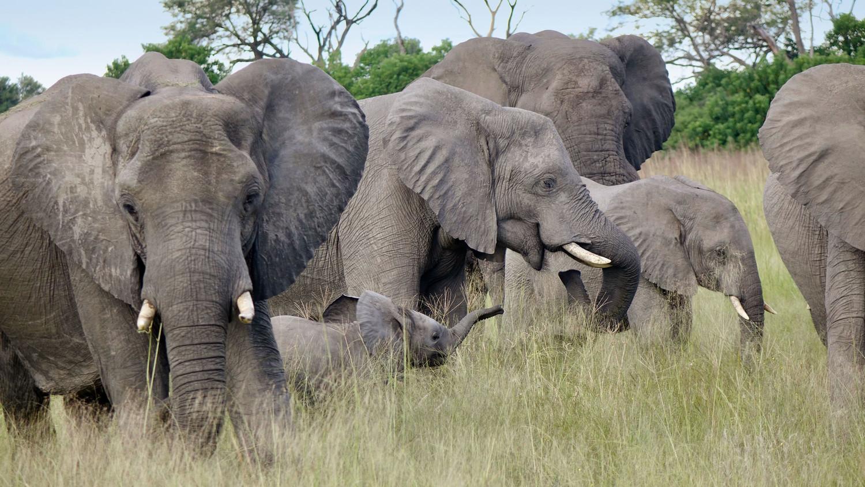 martha travel elephants