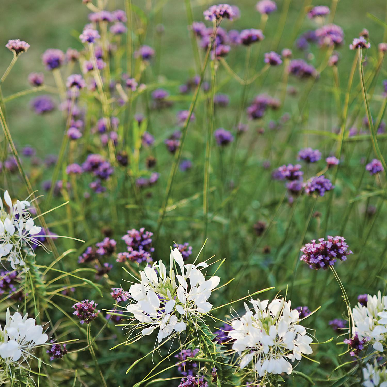 Your Five Point Plan For A Deer Resistant Garden Martha Stewart