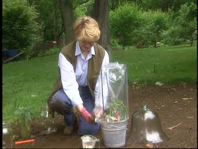 Video Propagating Roses Cuttings With Hormones Martha