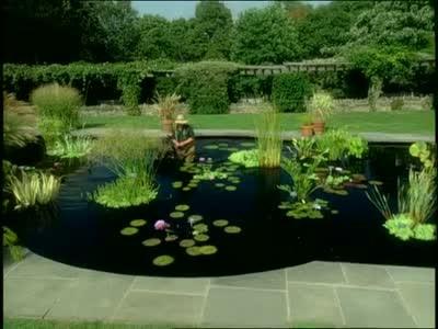Video: Aquatic Gardens in Wave Hill Public Garden   Martha Stewart