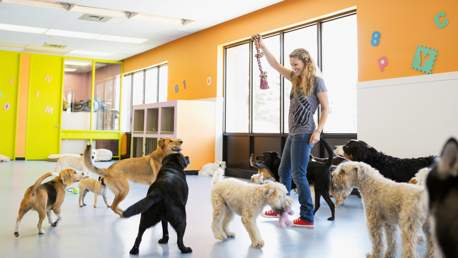 How to Choose the Best Dog Day Care