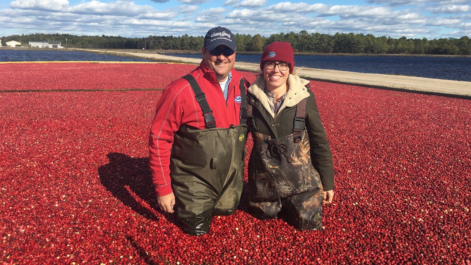 Do You Know Where Cranberries Come From And How They Are