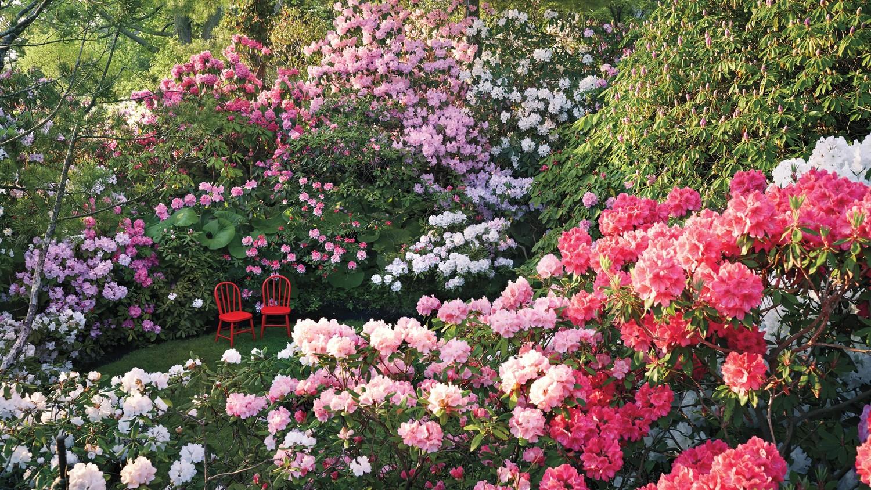 Flower Gardens Martha Stewart