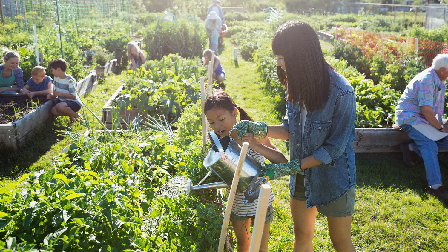 How to Get Involved in Your Community Gardens