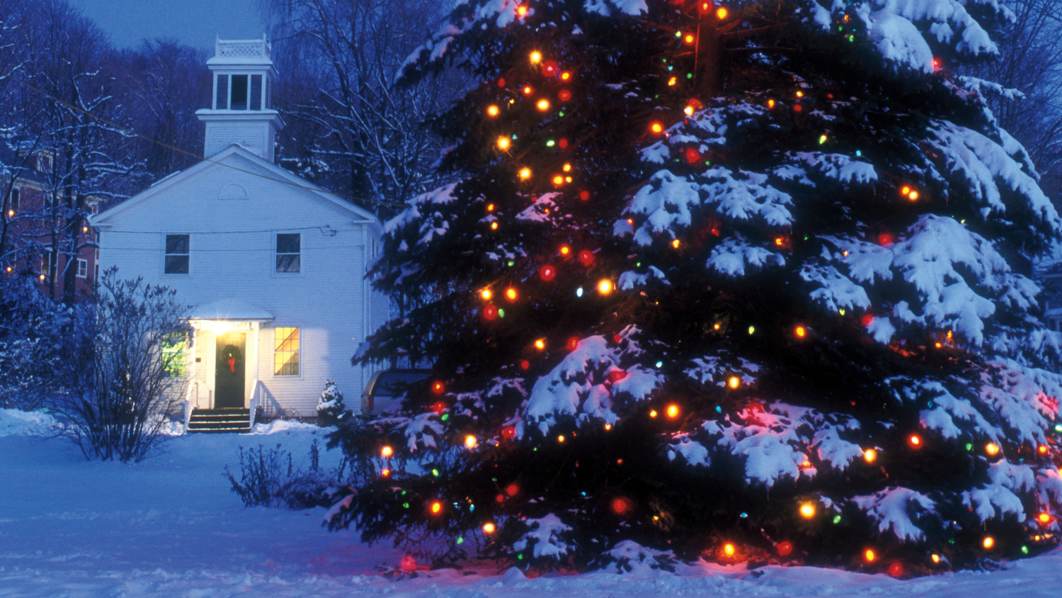 Large Outdoor Christmas Tree Lights Photo Album