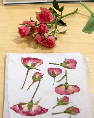 Pressing Flowers With Janie Martha Stewart