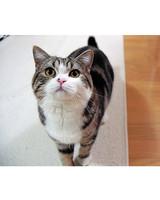 maru-cat-3.jpg