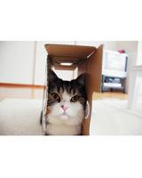 maru-cat-7.jpg