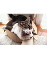 maru-cat-9.jpg